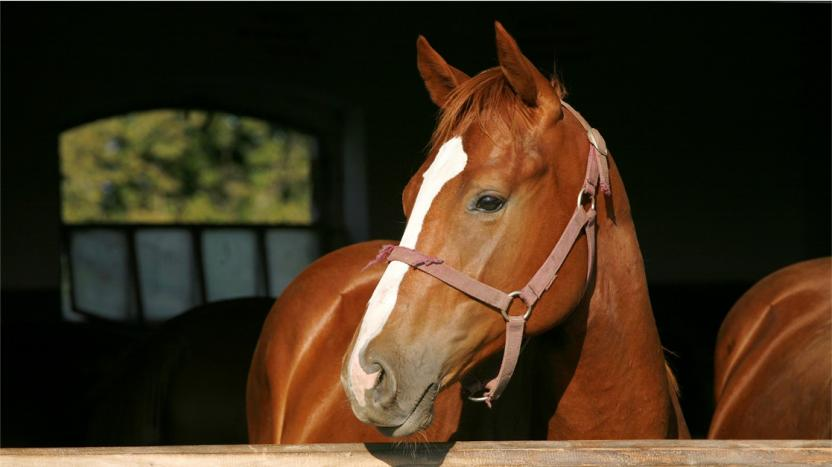 Horse in stables image - equine blog image